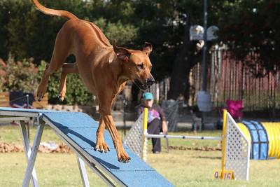 11-4-2018 Border Terrier-0871