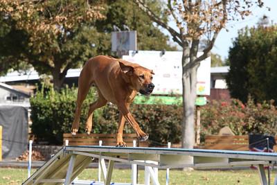 11-4-2018 Border Terrier-0868