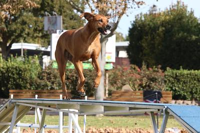 11-4-2018 Border Terrier-0869