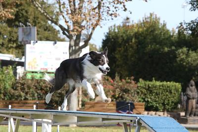 11-4-2018 Border Terrier-0864