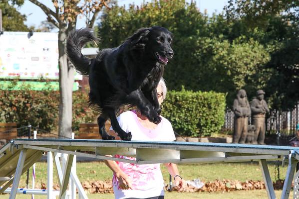 Excellent/Master Standard Big Dogs