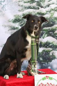 11-4-2018 Border Terrier-0798