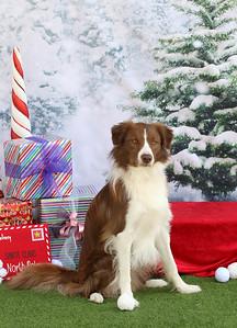 11-4-2018 Border Terrier-0544