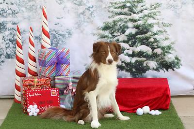 11-4-2018 Border Terrier-0545