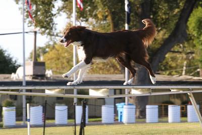 11-4-2018 Border Terrier-2546