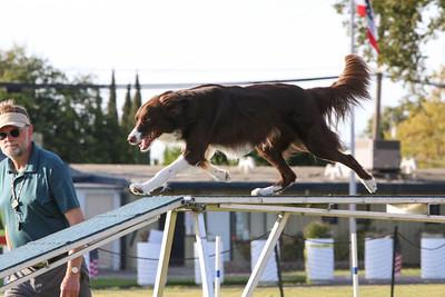 11-4-2018 Border Terrier-2548
