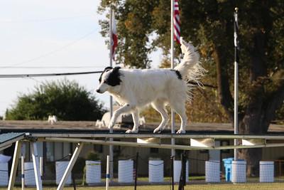 11-4-2018 Border Terrier-2561