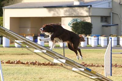 11-4-2018 Border Terrier-2543