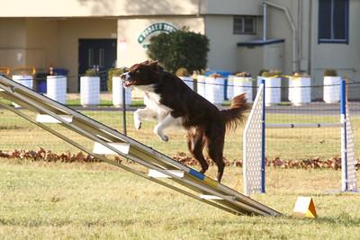 11-4-2018 Border Terrier-2542