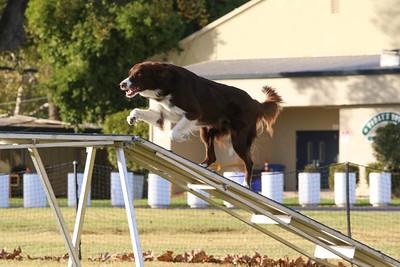 11-4-2018 Border Terrier-2544