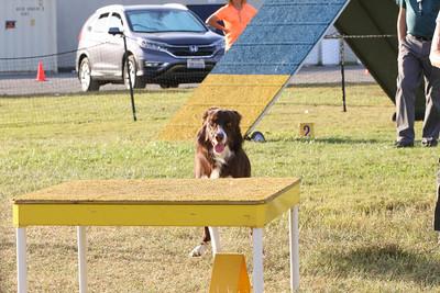 11-4-2018 Border Terrier-2552
