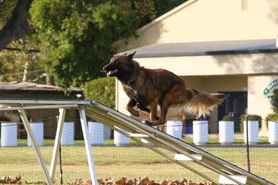 11-4-2018 Border Terrier-2538