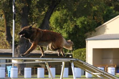 11-4-2018 Border Terrier-2539