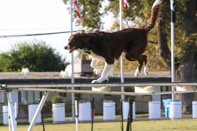 11-4-2018 Border Terrier-2547