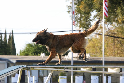 11-4-2018 Border Terrier-2540
