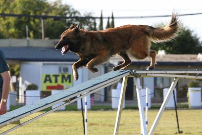 11-4-2018 Border Terrier-2541