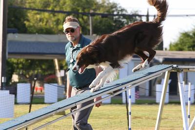 11-4-2018 Border Terrier-2549