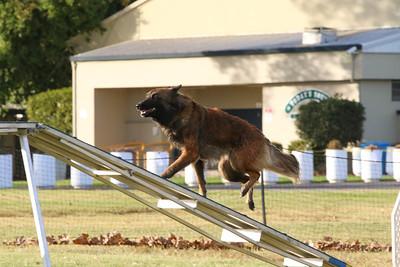 11-4-2018 Border Terrier-2537