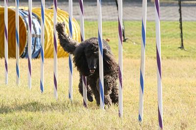 11-4-2018 Border Terrier-2314