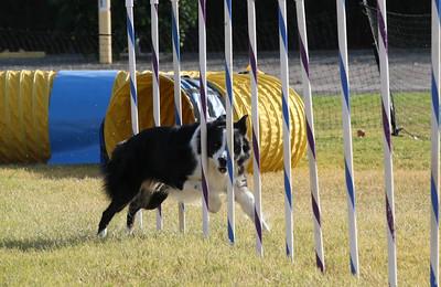 11-4-2018 Border Terrier-2368