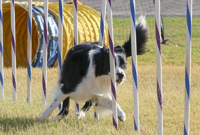 11-4-2018 Border Terrier-2372