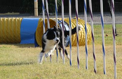 11-4-2018 Border Terrier-2367