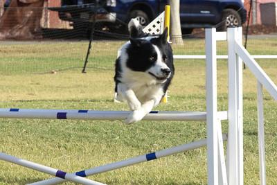 11-4-2018 Border Terrier-2363