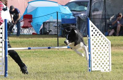 11-4-2018 Border Terrier-2366