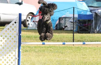 11-4-2018 Border Terrier-2299