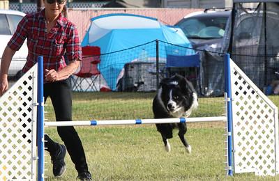 11-4-2018 Border Terrier-2364