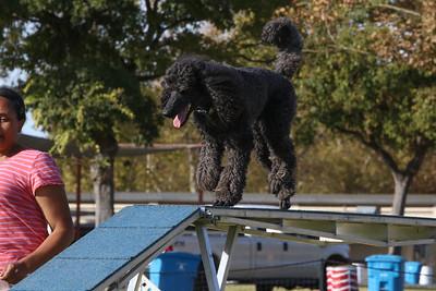 11-4-2018 Border Terrier-2168