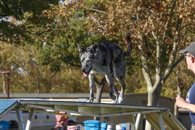 11-4-2018 Border Terrier-2229
