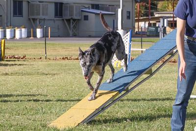 11-4-2018 Border Terrier-2231