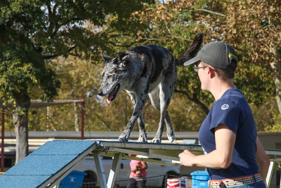 11-4-2018 Border Terrier-2230