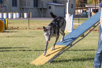 11-4-2018 Border Terrier-2232