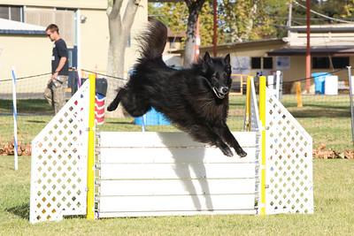 11-4-2018 Border Terrier-0329