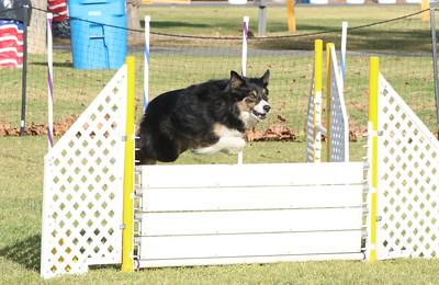 11-4-2018 Border Terrier-0339