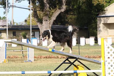 11-4-2018 Border Terrier-0344