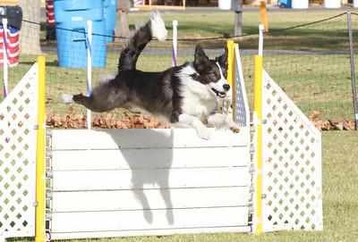 11-4-2018 Border Terrier-0282