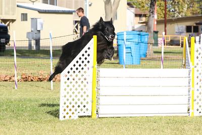 11-4-2018 Border Terrier-0327