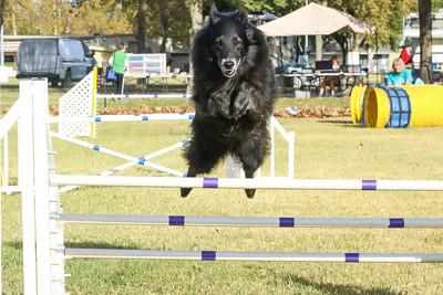 11-4-2018 Border Terrier-0332