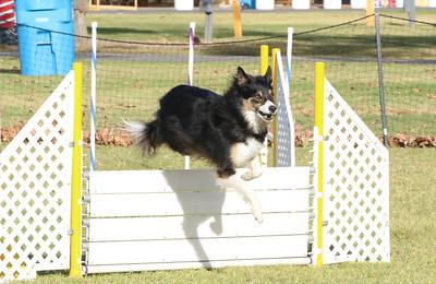 11-4-2018 Border Terrier-0340
