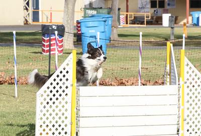 11-4-2018 Border Terrier-0281