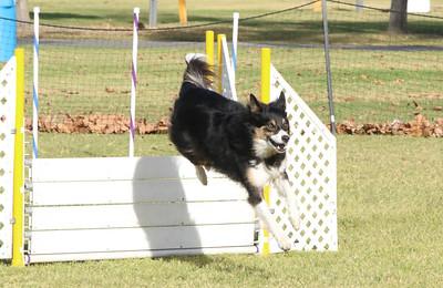 11-4-2018 Border Terrier-0341