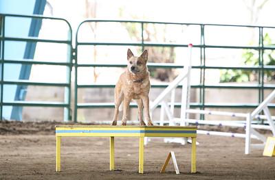 3-11-2018 Bloodhound-2251
