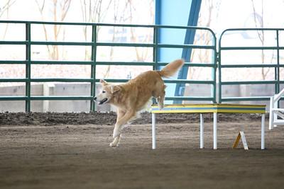 3-11-2018 Bloodhound-1760