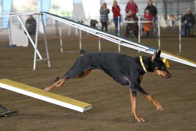 3-11-2018 Bloodhound-1722