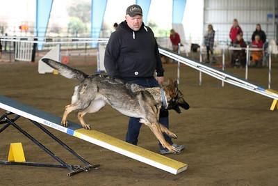 3-11-2018 Bloodhound-1729