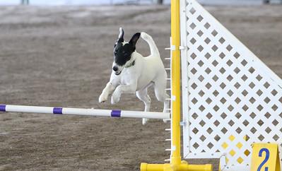 3-11-2018 Bloodhound-3435