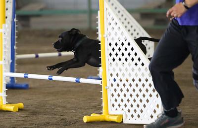 3-11-2018 Bloodhound-3446